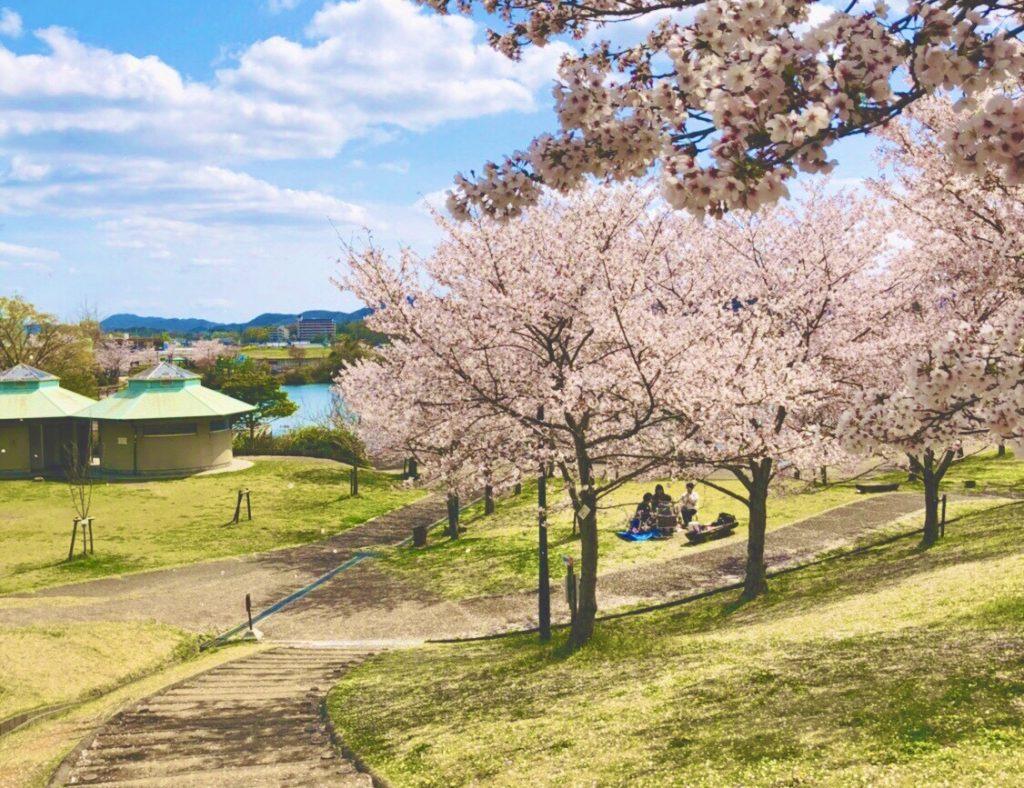 丸山総合公園桜風景