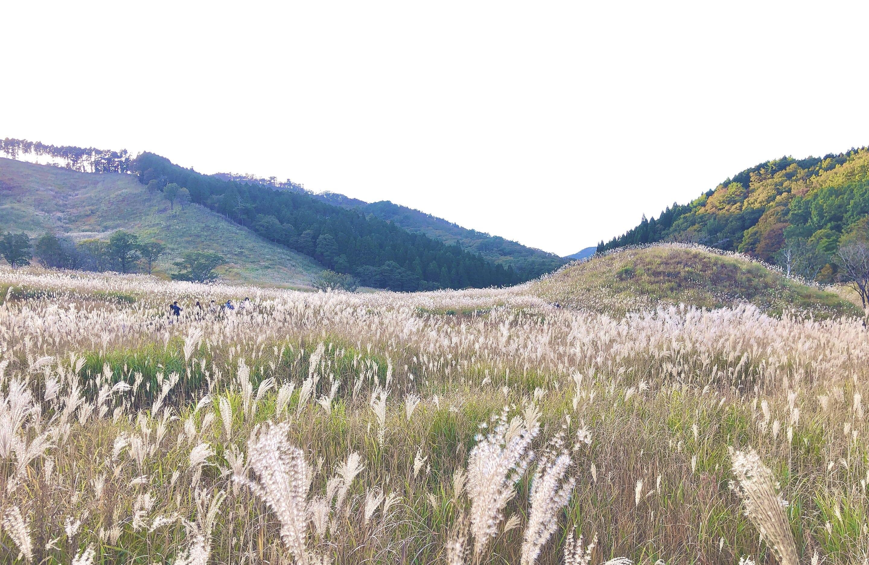 砥峰高原風景